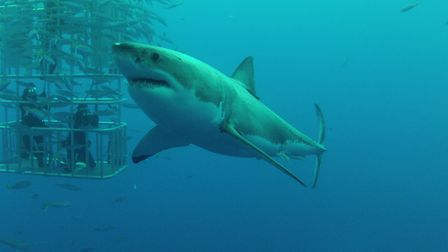 Children have requested a shark infested swimming pool for new play equipment. Picture: ARCHANT LIBR
