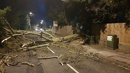 A fallen tree in Belstead Road, Ipswich. Picture: CONTRIBUTED