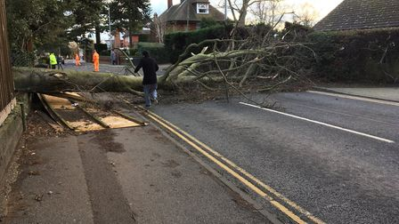 Tree down in Belstead Road. Picture: SHAUN THORPE