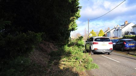 Trees obstruct the road in Henley. Picture: SARAH LUCY BROWN