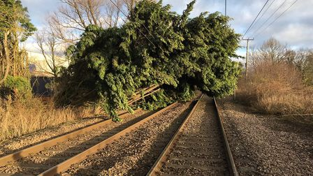 Huge tree blocks line between Norwich and Ipswich. Picture: GREATER ANGLIA