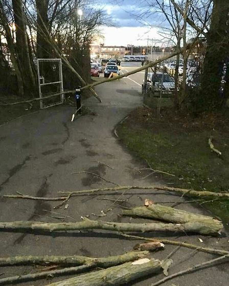 Fallen trees block route to Colchester North Station. Picture: MARTIN GOSS