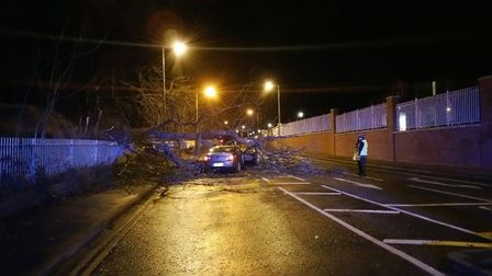 A driver narrowly escaped injury when a tree hit their car in Mersea Road, Colchester. Picture: ESSE