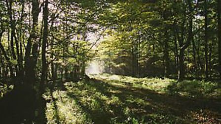 Countryside Stewardship Woodland Creation Grant opens for applications. Picture: NATURAL ENGLAND