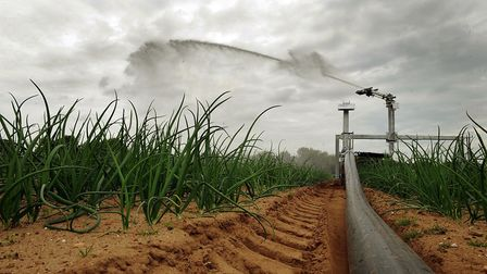 Crops being irrigated at Dale Farm, Wantiston Hall.