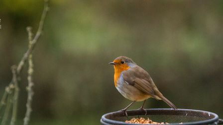Spend this weekend bird watching. Picture: SIMON COLLINS