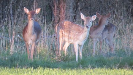 The accident is reported to have happened when a car swerved to avoid a deer. Picture: ARCHANT LIBR