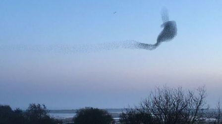 A murmuration of starling above RSPB Minsmere. Picture: RSPB MINSMERE