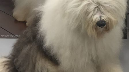 The Dulux dog will be at Wickes in Martlesham Heath. Picture: DULUX