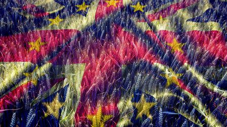Winter Wheat crop in late June overlaid with the flags of Great Britain and the European Union. PIct