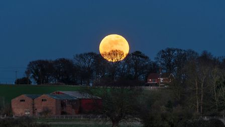 Supermoon just about to rise abover the trees. Picture: PAUL TEMPLETON
