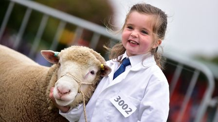 Junior Handlers Sheep Class on the second day of the Suffolk Show 2016. One of the youngest handle