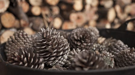 Stored pinecones ready for burning as kindling on the winter fire. Picture: GETTY IMAGES