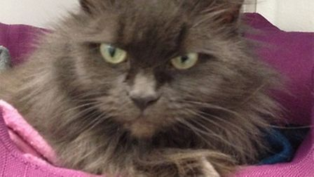 Could you give the fluffy Kitka a new home?