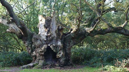Old Knobbley in Mistley. Picture: ARCHANT