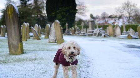 Dudley enjoying the February snow. Picture: SARAH LUCY BROWN