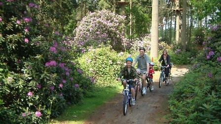 Thetford Forest Park on the border of Norfolk and Suffolk. Picture: ARCHANT LIBRARY