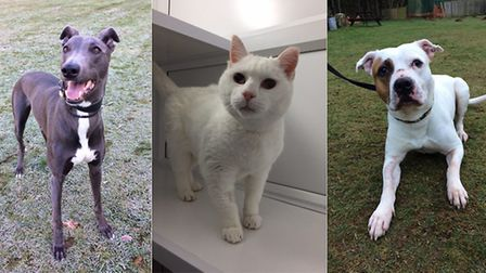Could you possibly adopt one of these cute animals?