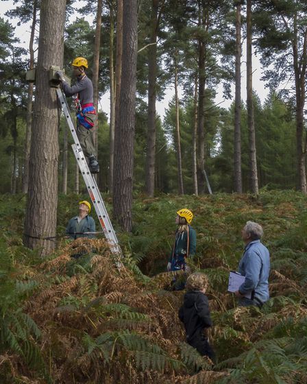 Members of the Suffolk Bat Group check bat boxes in Thetford Forest. Picture: ARTHUR RIVETT
