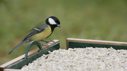 Undated Handout Photo of bird feeding at bird table. See PA Feature GARDENING Bird. Picture credit s