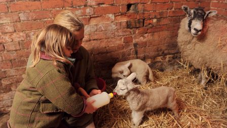 Easton Farm Park has got some new arrivals - head down to see them this half term. Picture: SARAH LU