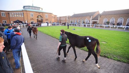 Frankel's foals fetched a high prices when auctioned at Tattersalls in Newmarket. Picture: ARCHANT L