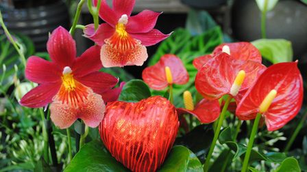 Marlows Unique Red Orchids and Anthuriums. Picture: MARLOWS.