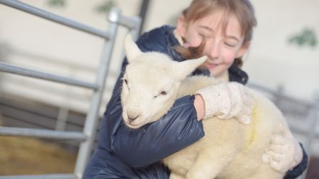 Amelia Guppy cuddles a lamb at Easton Farm Park. Picture: SARAH LUCY BROWN