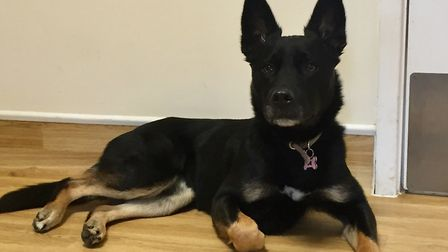 Could the sweet natures Xena be your new best friend?