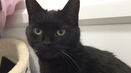 Could you give a home to the affectionate Star?