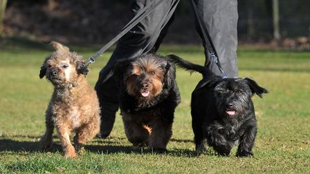 Winnie, Mitzy and Lucy need a new home. Picture: SARAH LUCY BROWN