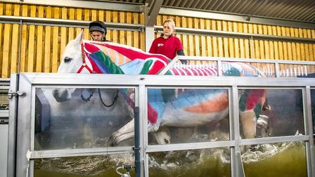 Water treadmill at the equine centre at Writtle University College PIC: Boots and Hooves