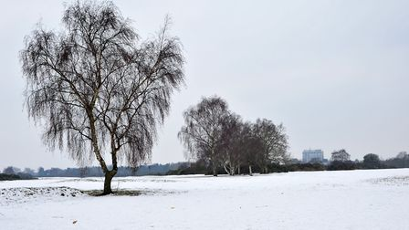 Rushmere Heath a blanket of white. Picture: SARAH LUCY BROWN