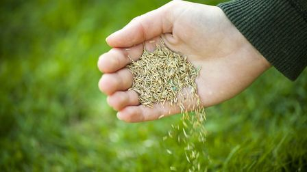 You could need to consider re-seeding your lawn. Picture: Thinkstock/PA. .
