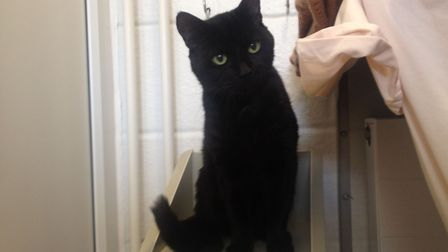 Could the gentle Sooty be the cat for you?