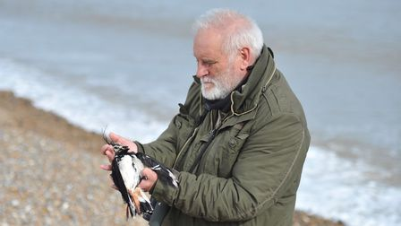 Thousands of dead sea birds have washed up on beaches in Suffolk over the last few days. Steve Piotr