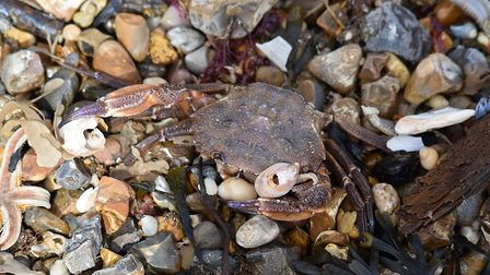 Experts say benthic species - including starfish, crabs and lobsters - were killed in plunging sea t