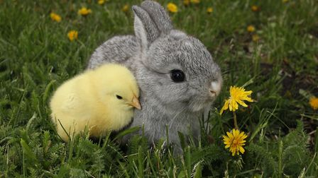 Pets at Home is stopping the sale of rabbits over easter. Picture: UROSHPETROVIC/GETTYIMAGES/ISTOCKP