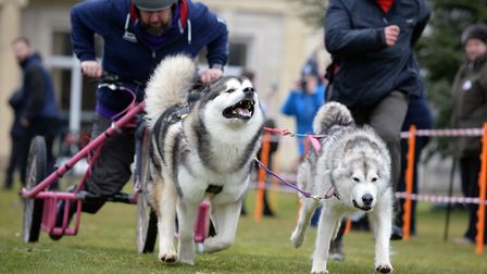 Andy Halfpenny in action with the sled dogs at the Phoenix Winter Games.Picture: SHANE WILKINSON/