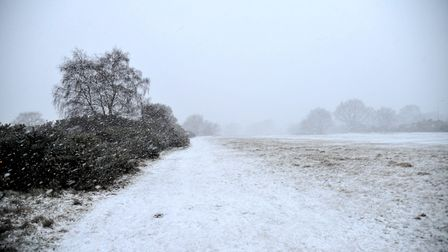 Rushmere Common after this afternoon's snowfall. Picture: SARAH LUCY BROWN