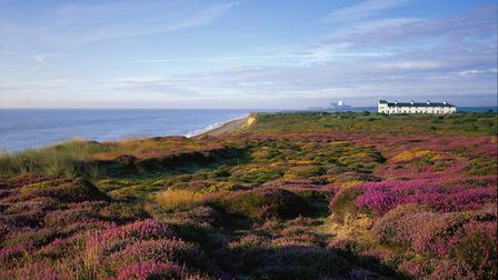 The iconic Coastguards Cottages stand in the distance amid the famous purple heather of the National