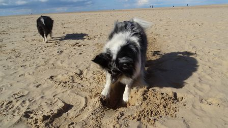 Distressed dog owners have reported a harmful 'fatty substance' washed up on beaches across Suffolk.