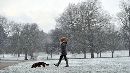 Dog walkers enjoy the snow in Christchurch Park. Picture: SARAH LUCY BROWN