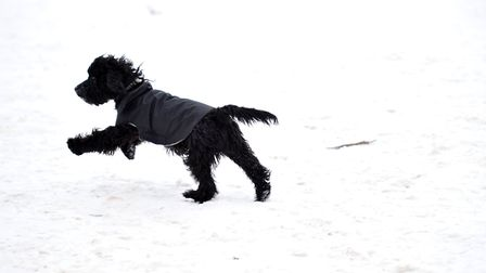 Many of our four legged friends have been enjoying the flurries this week. Picture: SARAH LUCY BROW