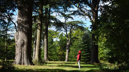 Easter activities for youngsters are in store at Ickworth, including exploring the woodland. Picture