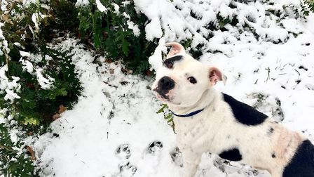 RSPCA-Patch