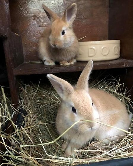 Sisters Panna and Cotta can't wait to find their new home