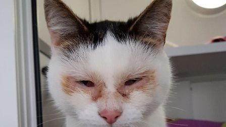 Taffy has had a bit of a bad time but now if fully ready for his new home