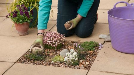 Pocket of planting between paving. Picture: RHS/PA.