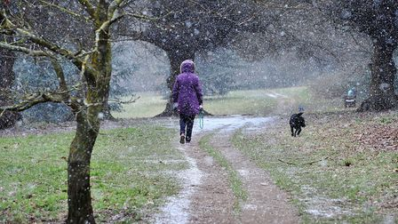 A dog walker in the snow in Christchurch park. Picture: SARAH LUCY BROWN